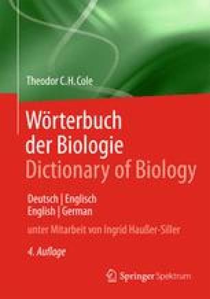 Deutsch Englisch Springerlink
