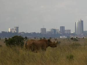 noshörning i nairobi