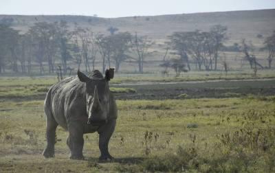 Nakuru noshörning