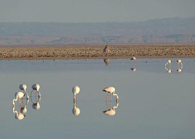 Morgon vid Laguna Chaxa. Salar de Atacama