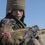 Pojke med tupp. Simien Mountains