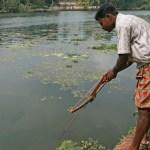 Harpunerare. Backwaters