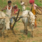 Plöjning av åker. Bishnupur