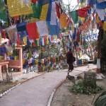 Böneflaggor. Darjeeling