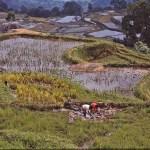Torajalandskap. Batutumonga