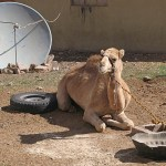 Paradox nr 2. Byn Wadi Rum