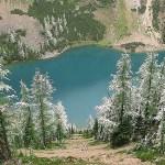 Snöklädda träd. Lake Louise National Park (U)