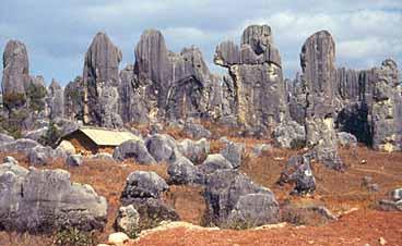 Stenskogen. Shilin