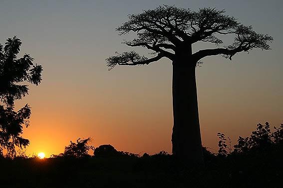 madagaskar-baobab_05