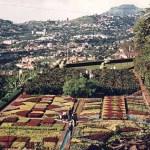 Botaniska trädgården. Funchal