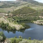 Vinberg. Douro (U)