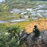 Torajalandskap. Batutomonga