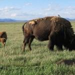 Grand Teton National Park, WY (U)
