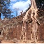 Templet Ta Prohm. Angkor Vat. Kambodja