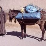 Följ med på min resa i Marocko! Marrakech