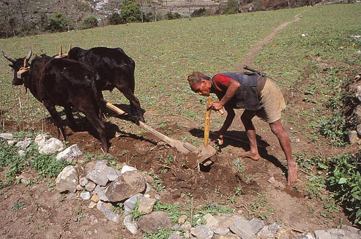 Jordbrukare. Besi Sahar