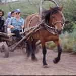 Hästtransport. Kazanovka