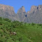 Drakensberg (U)