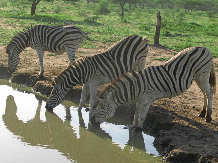 sydafrika-imfolozi_07