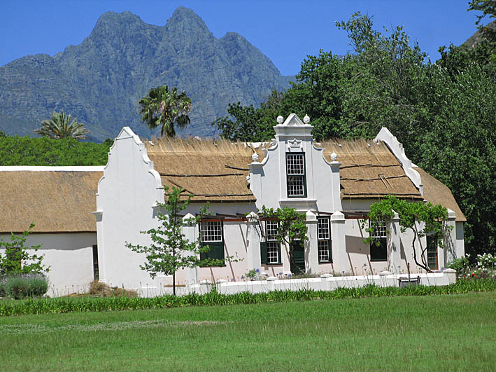 Vingård. Stellenbosch