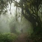 Vandring i Kilimanjaro National Park