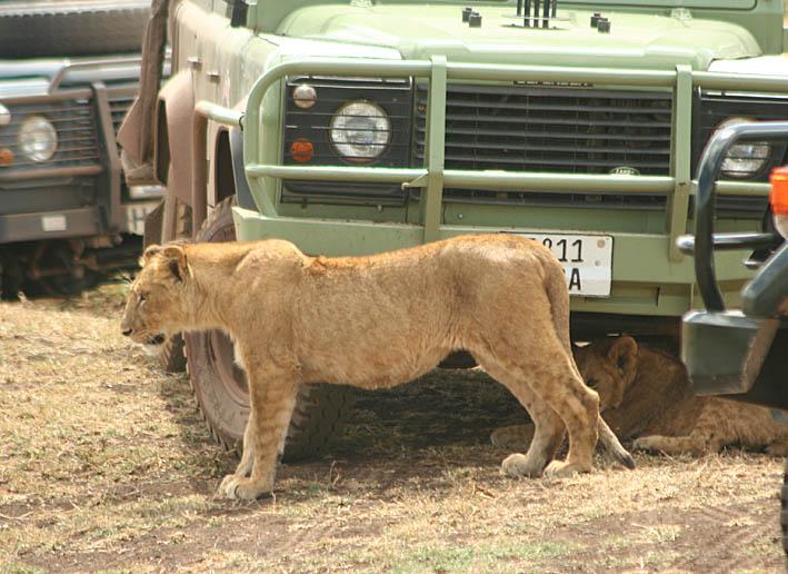 tanzania-ngorongoro_04