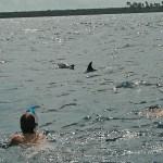 Simma med delfiner. Zanzibar