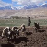 På vägen mot Kailash. Sher. Tibet