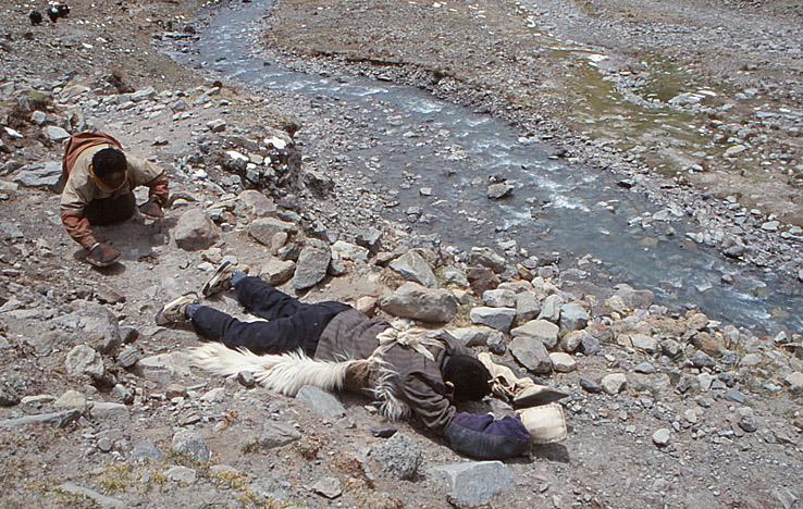 Prostrerande pilgrimer på sin Kailash khora
