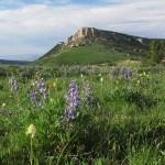 Big Horn National Park, SD