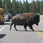 Yellowstone National Park. WY (U)