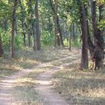 Salskogen. Bandhavgarh