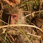 Nyfiken blick! Bandhavgarh