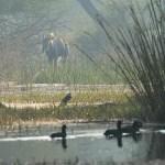 Gryning i Keoladeo Ghana National Park (U)
