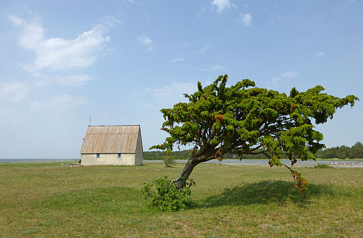 Kovik. Gotland