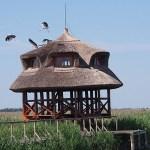 Fågelskådning. Pustan. Hortobagy National Park (U)