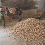 Sortering av ingefära. Fort Kochi