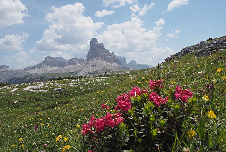 Alpros och berget Drei Zinnen. Monte Piana. Dolomiterna (U)