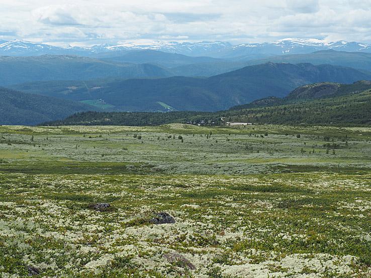 Hövringen. Rondane Nationalpark