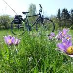 Cykling på Österlen.