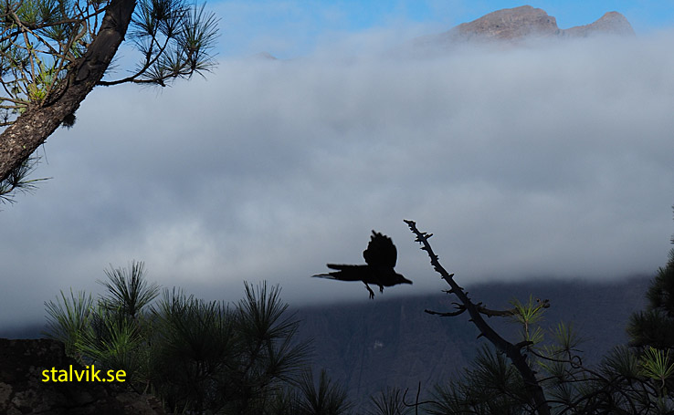 Vandring i nationalparken vid La Cumbrecita