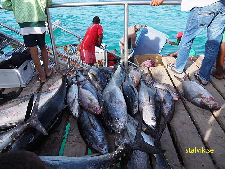 På morgonen landas fisken. SantaMaria