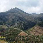 Landskap. Polyrrinia