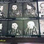 Registreringen. Auschwitz