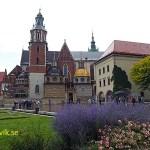 Katedralen. Wawelslottet. Krakow (U)