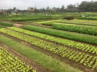 Planteringar