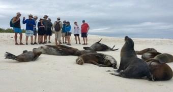 Galapagos i ett nötskal