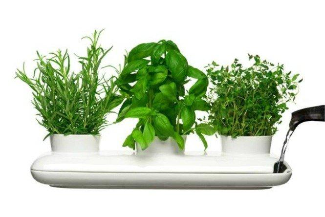 5_Ukrasite biljkama moderni enterijer(1)