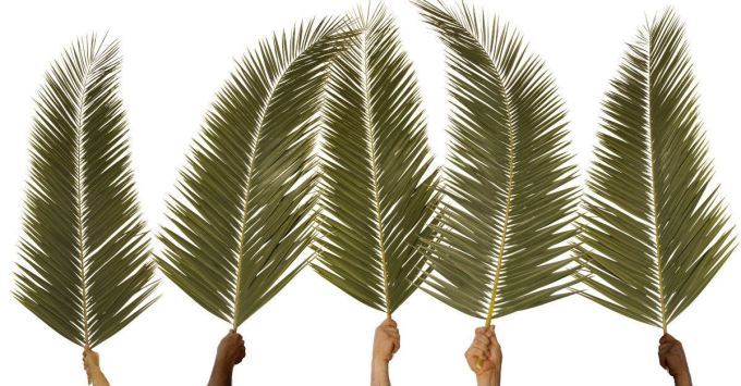 Image result for palms