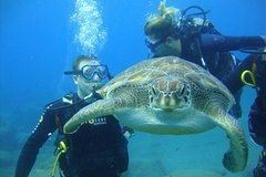 Scuba Dive for beginners with Atlantic turtles in Costa Adeje, Tenerife